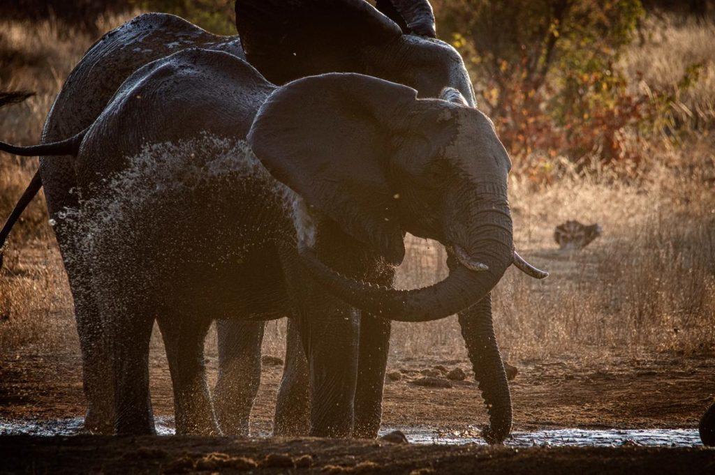 Elephants-at-waterhole-1024×681
