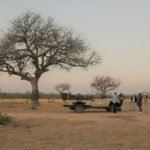 Game Drives (11)