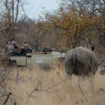Game Drives (6)