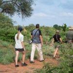 walking-safari-giraffe-sighting